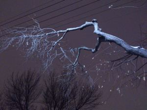 ghostly tree branch and snow