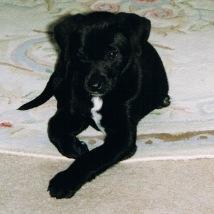 Aurora as a pup