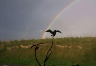 Rainbow in NZ leaving Oamaru