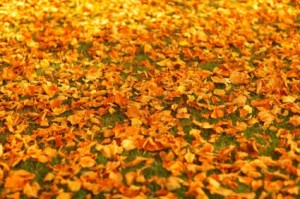 autumn_leaves_on_the_ground_208835