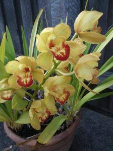 caroline's orchids 2