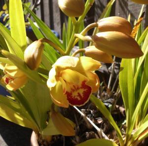 caroline's orchids 3