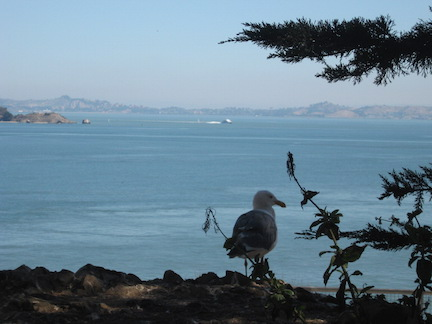 bird at Alcatraz