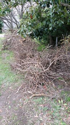 fallen tree 4