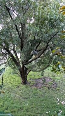 noisy minor in tree'