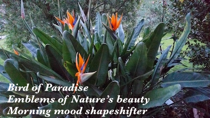 Paradise indeed..jpg