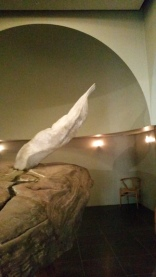 the-wing-of-a-dove