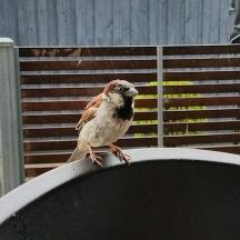 sparrow-3
