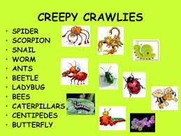 creepy crawly chart