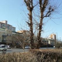 winter tree ulan batal mongolia