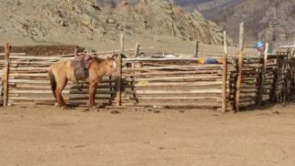 nomadic family's horse