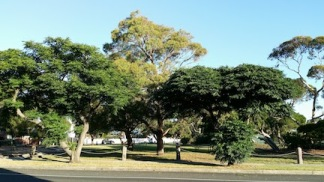 mcdonald street park