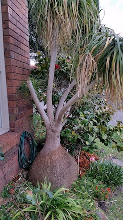 unusual tree