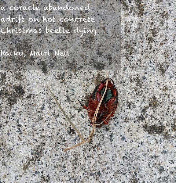 christmas beetle upset 2017