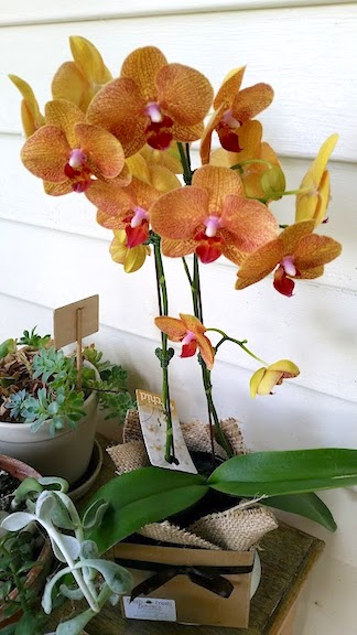orchid from Chat n Chuckle.jpg