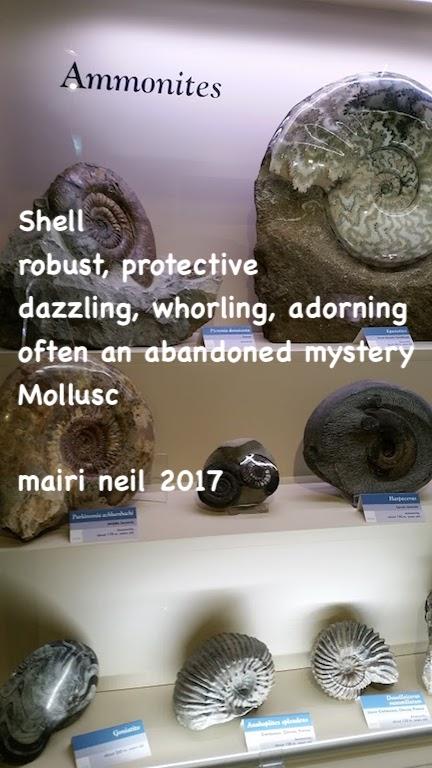 shell fossils.jpg