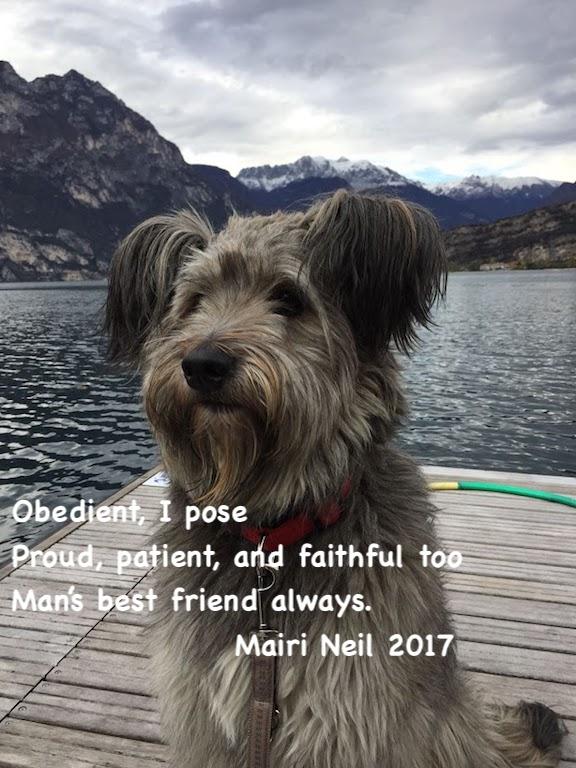 Tanja's dog
