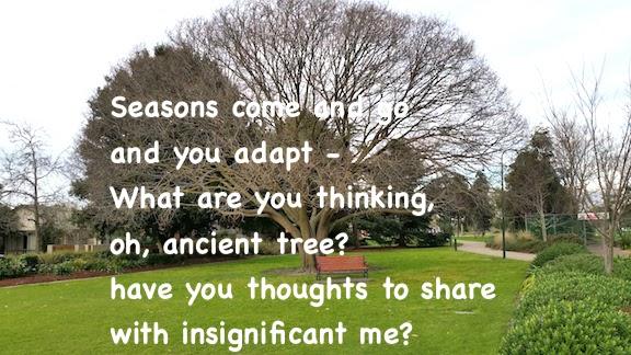 tree in park Moorabbin.jpg