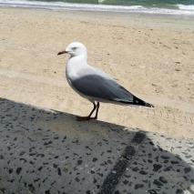 close up seagull
