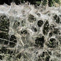 spider webs up close