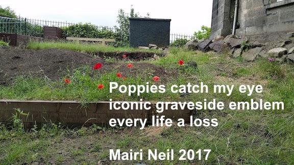 wild poppies scotland