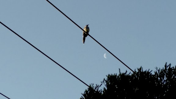 bird on electricity wire