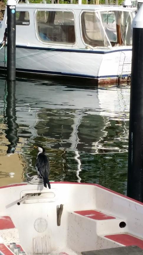 gannet on boat