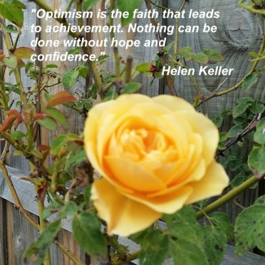 yellow rose with Helen keller quote