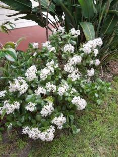 flowering july 18
