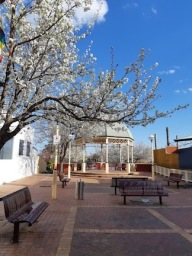 blossoms in bentleigh 1