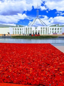 poppies outside towards parlt and water