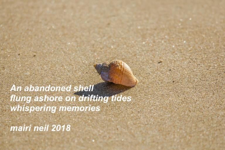 haiku abandoned shell.jpg