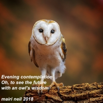 haiku - owl.jpeg