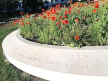 poem around real poppies