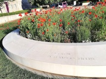 poppies grown in flanders field