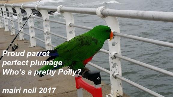 parrot st kilda pier.jpg