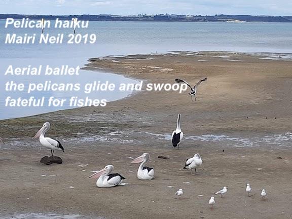 pelicans september 2018.jpg