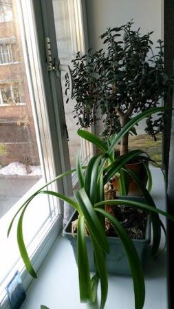plants homestay irkutsk