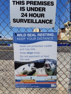 poster about seals