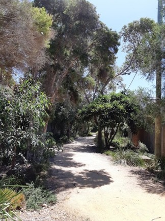 shaded path in park