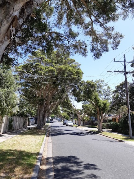 street trees 5