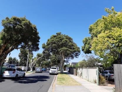 street trees 6