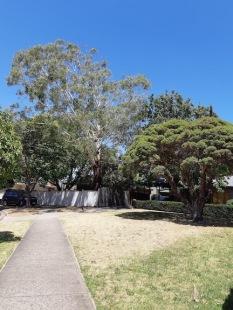 street trees2