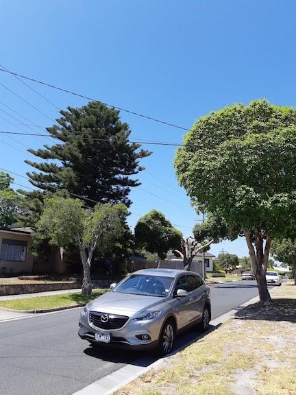 streets trees 4