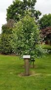 trees scott garden