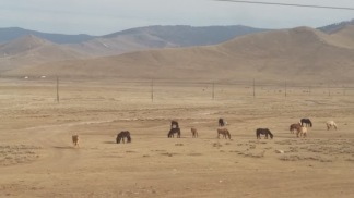 mongolian countryside 3