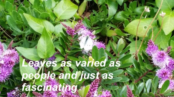 butterfly among leaves.jpg
