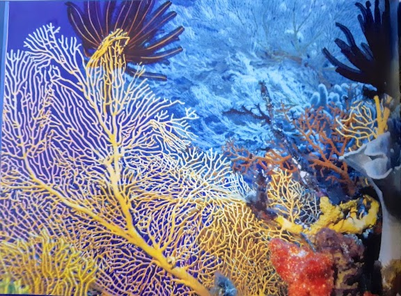 colourful coral.jpg