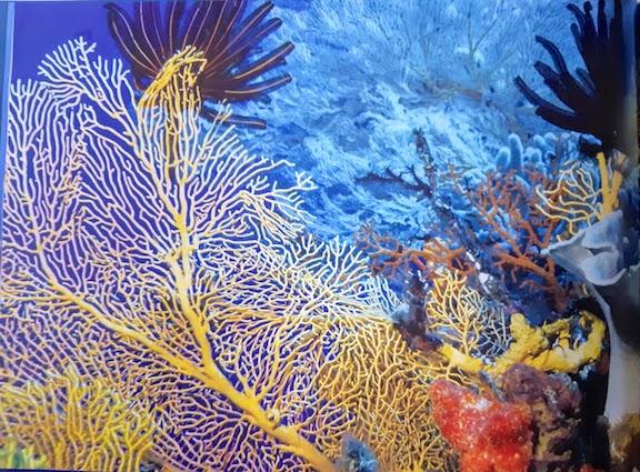 colourful coral.jpg