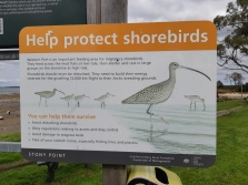 helpprotect shorebirds